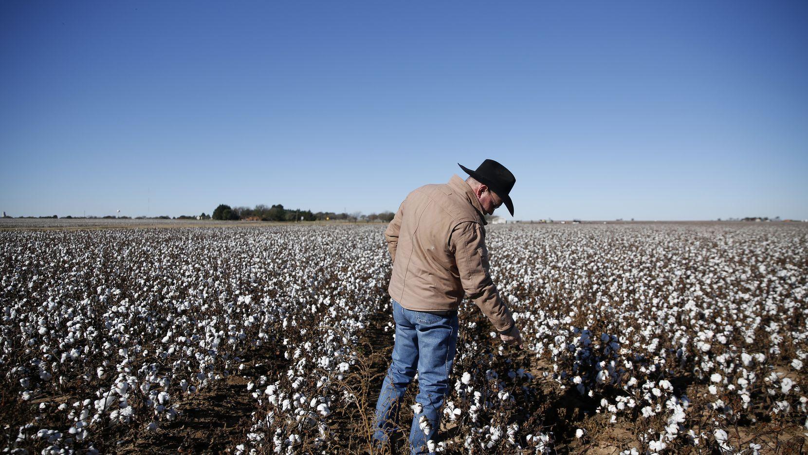Programme de VR pour les fermiers qui cultive du coton